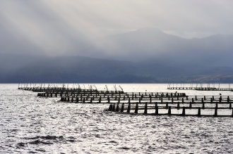 Salmon Farming In Tasmania