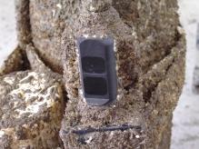 Wiper protecting Turbidity Sensor